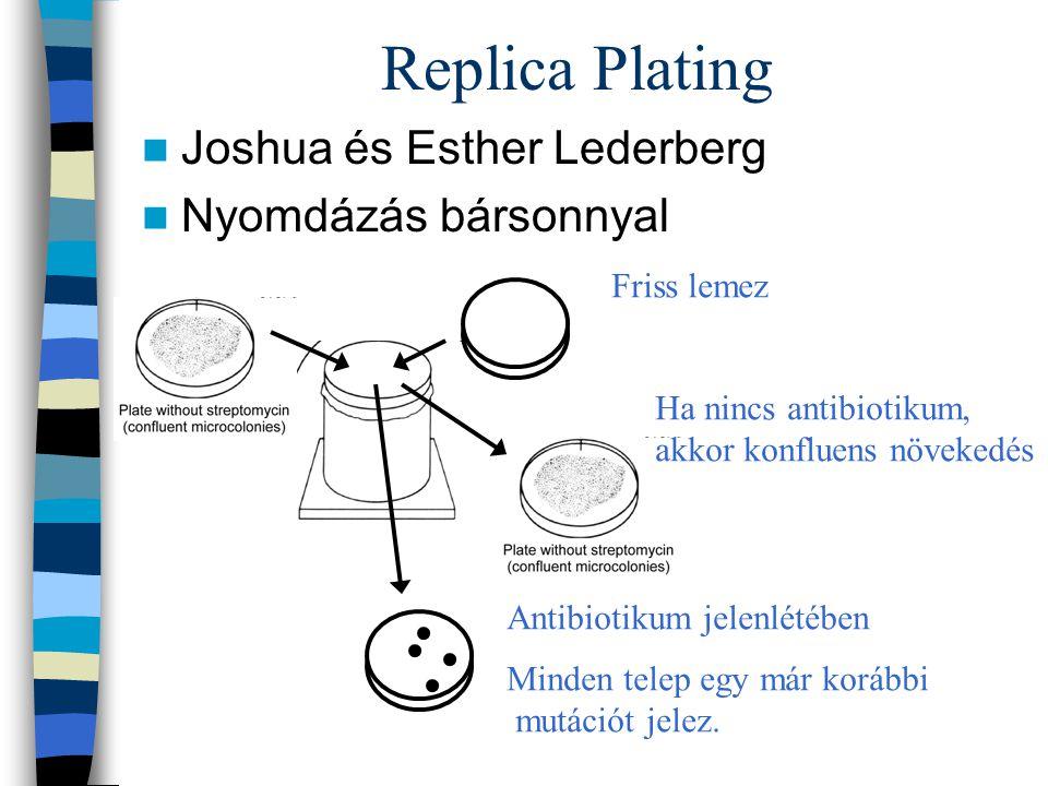 Replica Plating Joshua és Esther Lederberg Nyomdázás bársonnyal