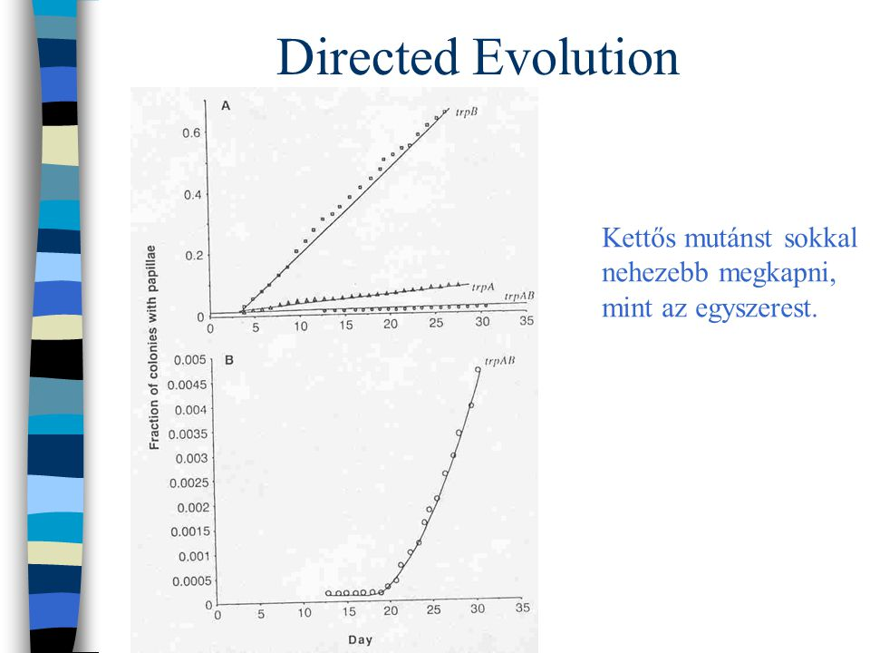 Directed Evolution Kettős mutánst sokkal nehezebb megkapni,