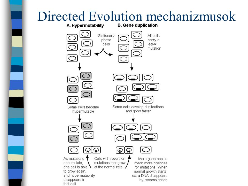Directed Evolution mechanizmusok