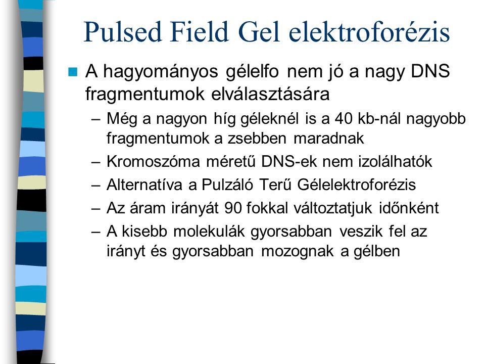 Pulsed Field Gel elektroforézis