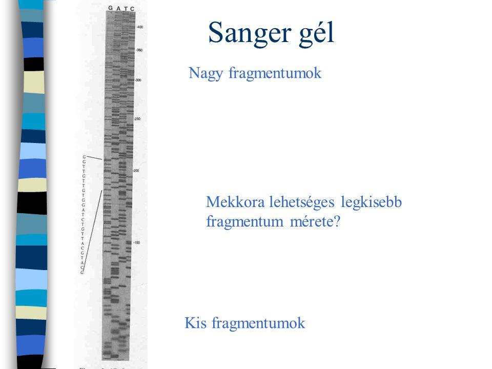 Sanger gél Nagy fragmentumok Mekkora lehetséges legkisebb