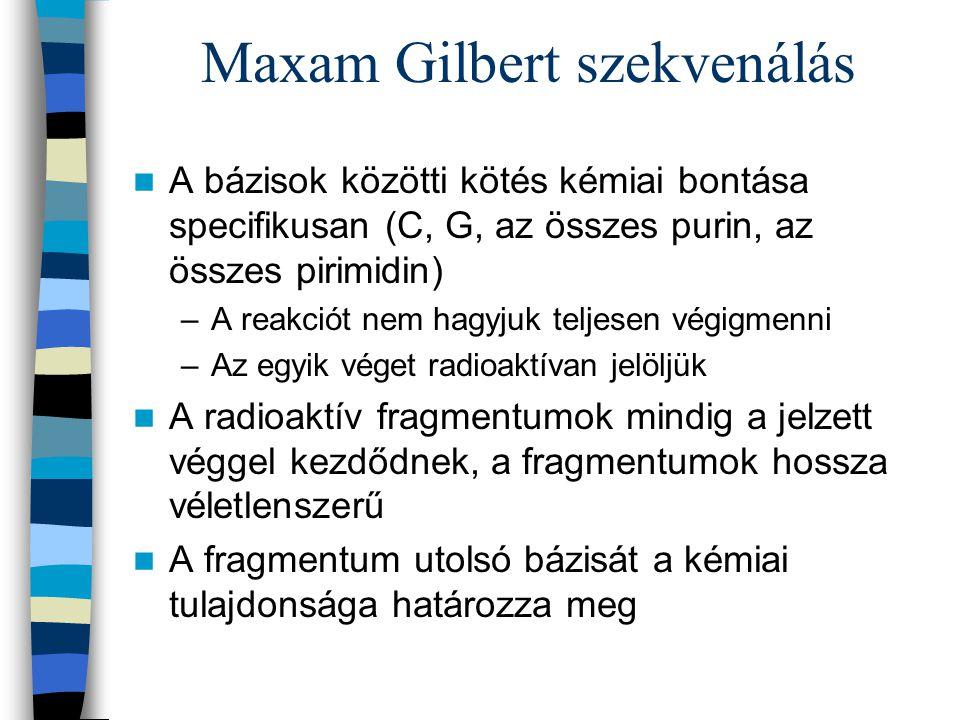 Maxam Gilbert szekvenálás
