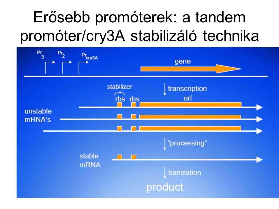 Erősebb promóterek: a tandem promóter/cry3A stabilizáló technika