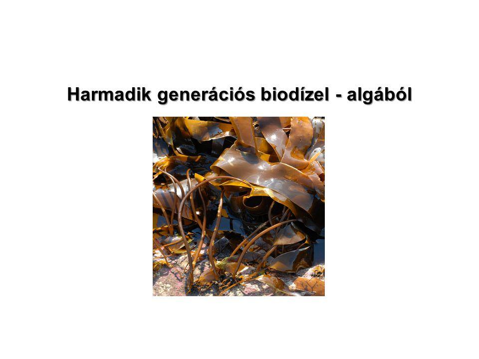 Harmadik generációs biodízel - algából