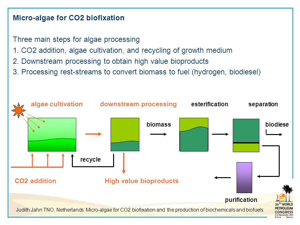 Micro-algae for CO2 biofixation Three main steps for algae processing