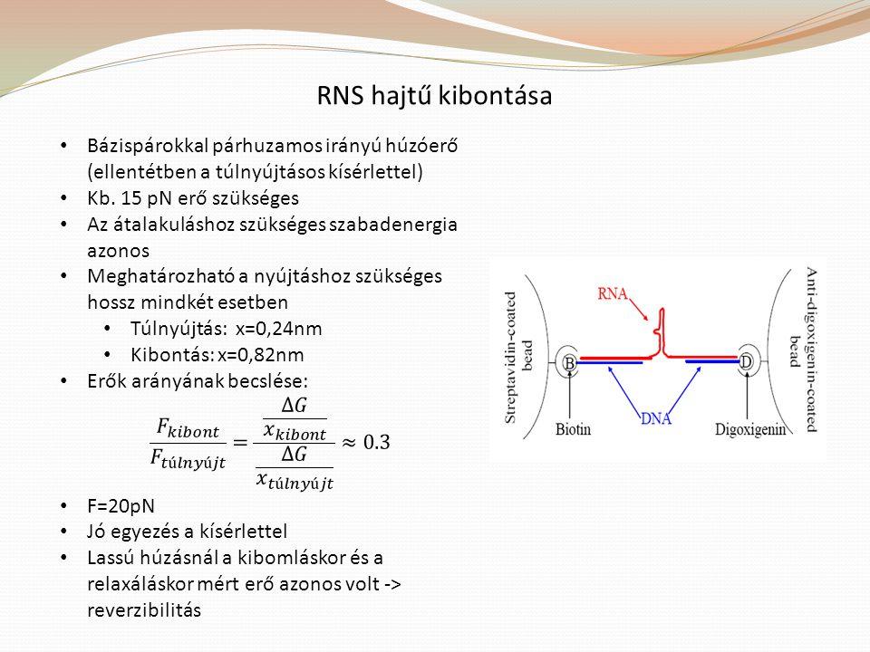 RNS hajtű kibontása Bázispárokkal párhuzamos irányú húzóerő (ellentétben a túlnyújtásos kísérlettel)