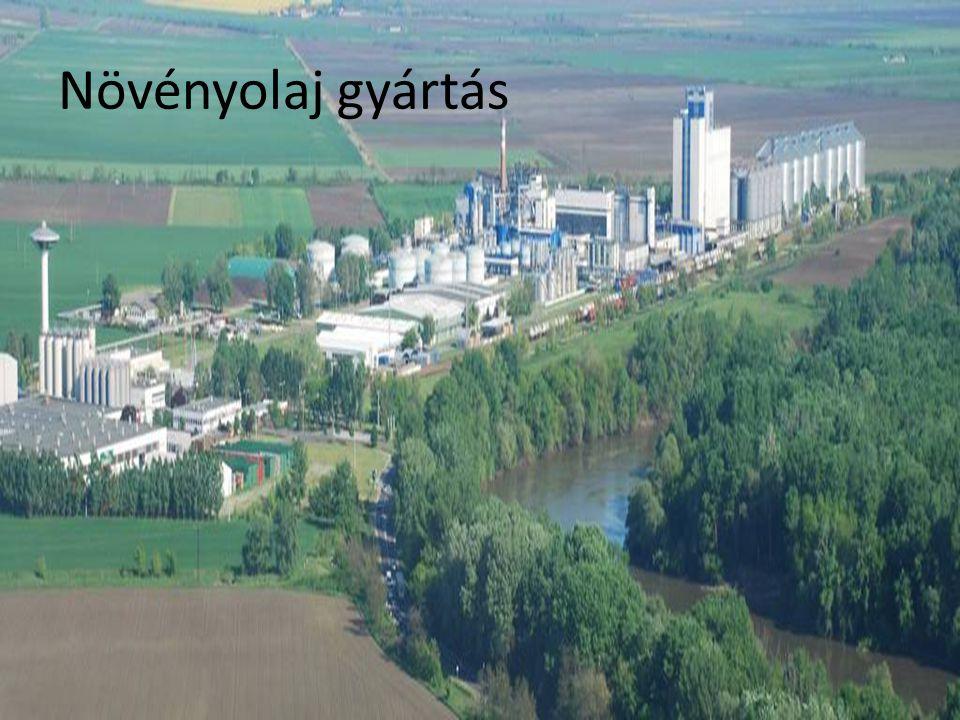 Növényolaj gyártás