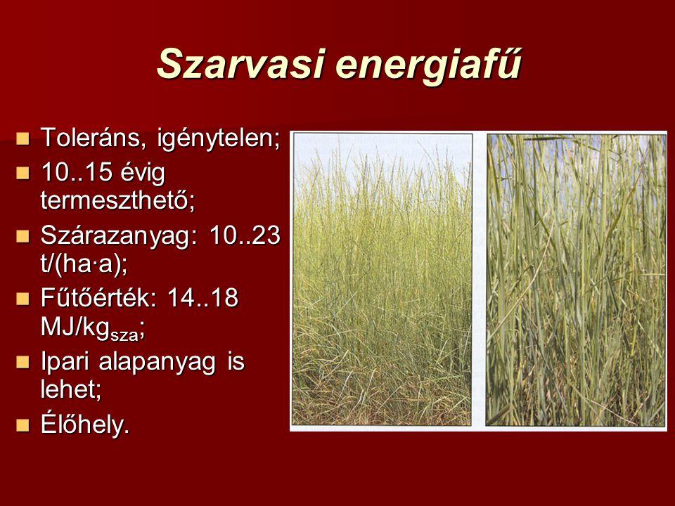 Szarvasi energiafű Toleráns, igénytelen; 10..15 évig termeszthető;