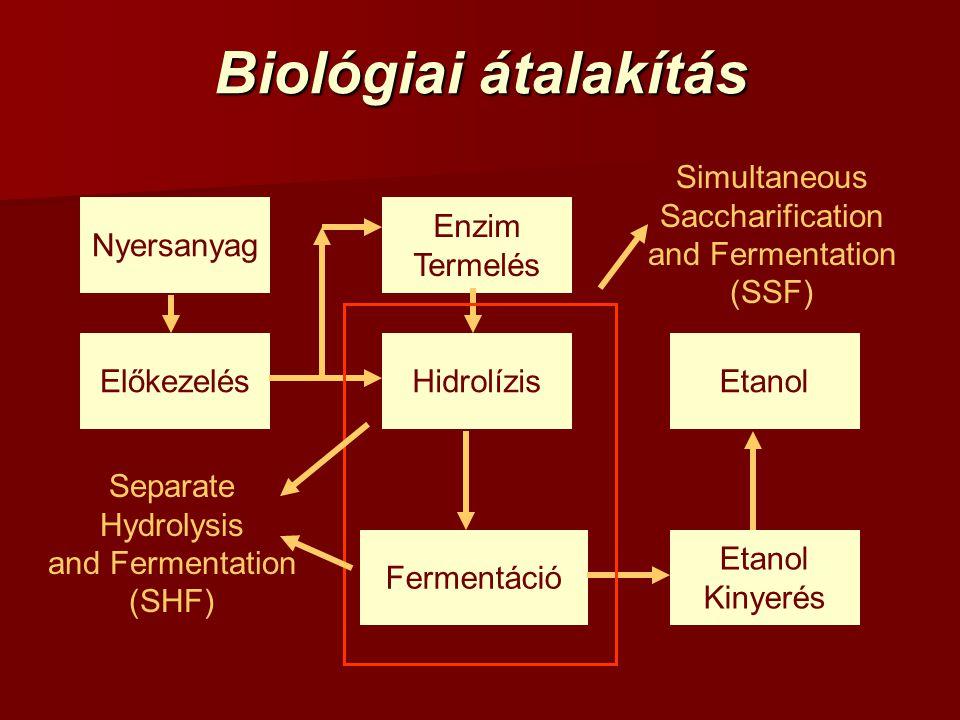 Biológiai átalakítás Simultaneous Saccharification and Fermentation