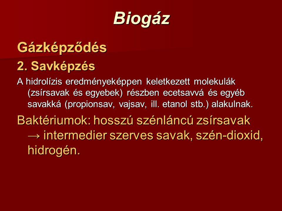 Biogáz Gázképződés 2. Savképzés