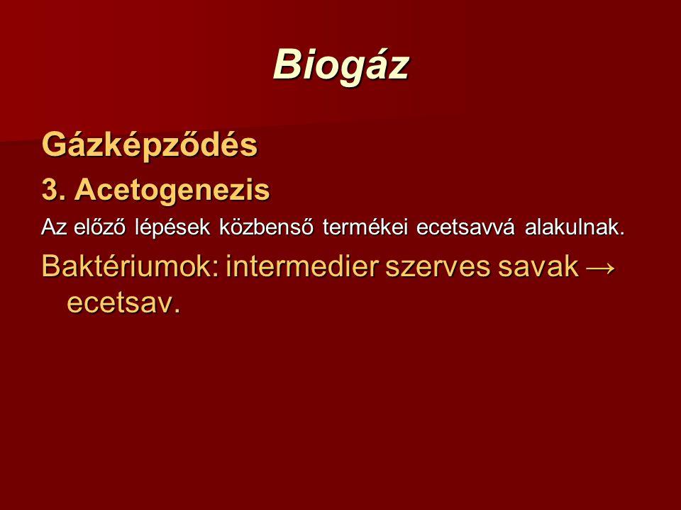 Biogáz Gázképződés 3. Acetogenezis