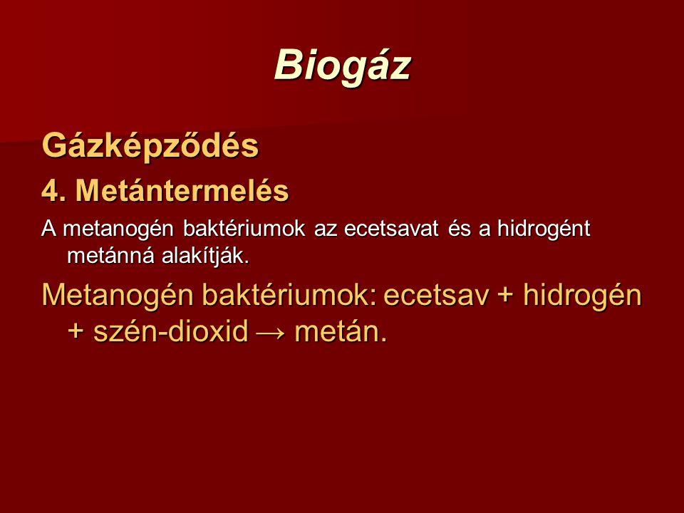 Biogáz Gázképződés 4. Metántermelés