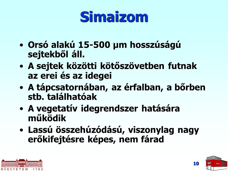Simaizom Orsó alakú 15-500 μm hosszúságú sejtekből áll.