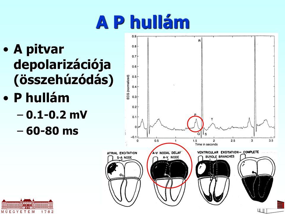 A P hullám A pitvar depolarizációja (összehúzódás) P hullám 0.1-0.2 mV