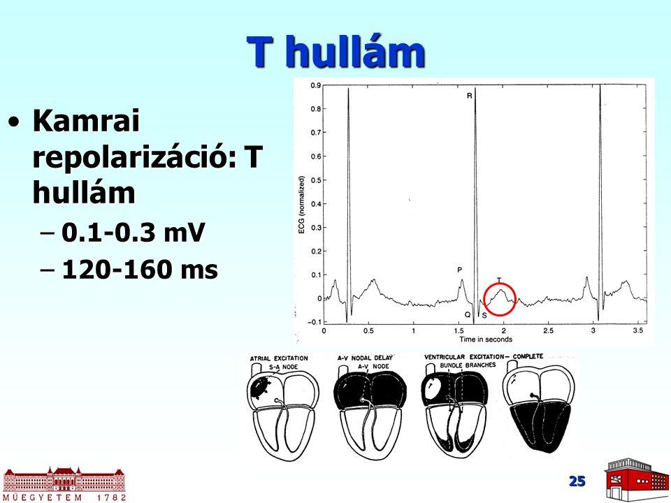 T hullám Kamrai repolarizáció: T hullám 0.1-0.3 mV 120-160 ms