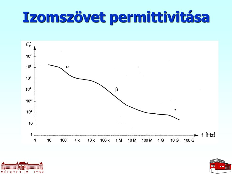 Izomszövet permittivitása