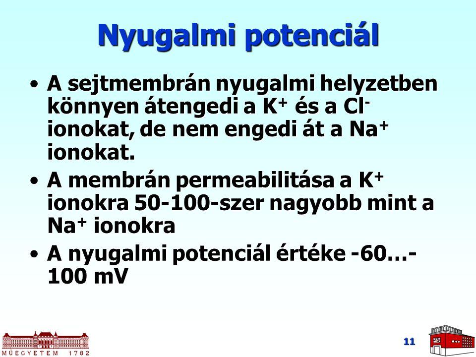 Nyugalmi potenciál A sejtmembrán nyugalmi helyzetben könnyen átengedi a K+ és a Cl- ionokat, de nem engedi át a Na+ ionokat.