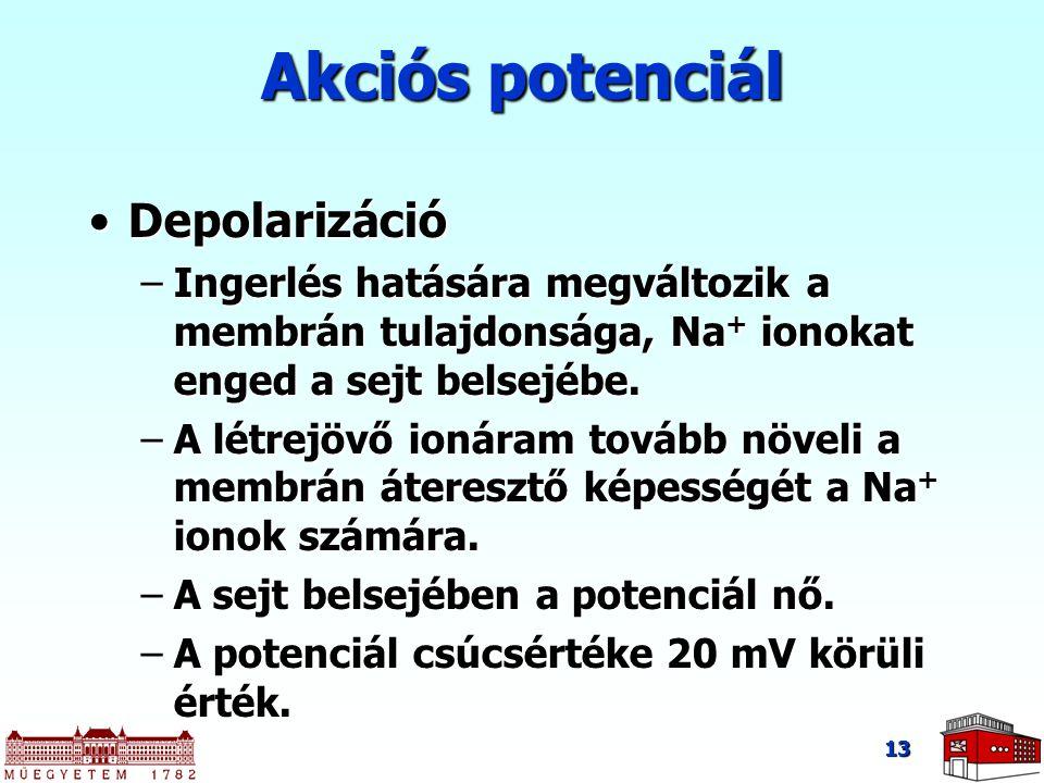 Akciós potenciál Depolarizáció