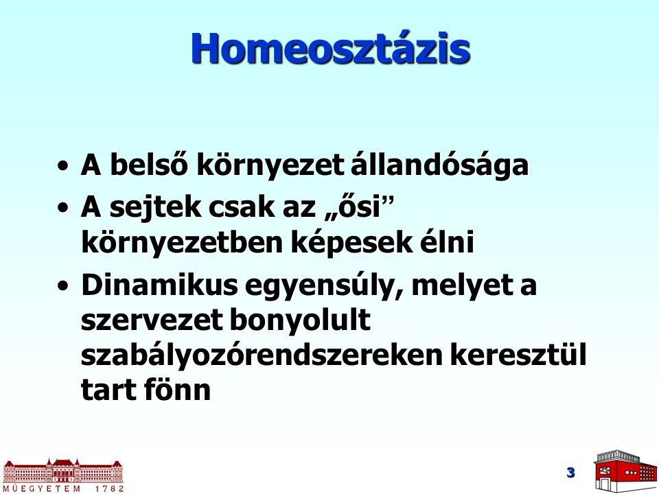 Homeosztázis A belső környezet állandósága