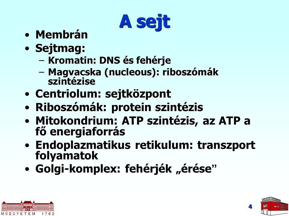 A sejt Membrán Sejtmag: Centriolum: sejtközpont