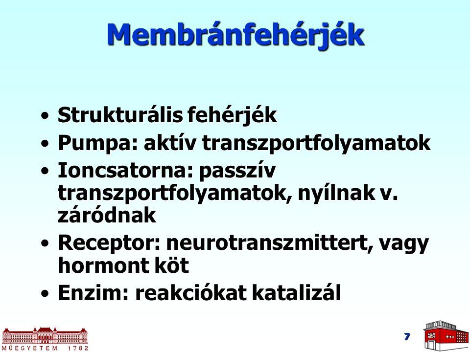 Membránfehérjék Strukturális fehérjék