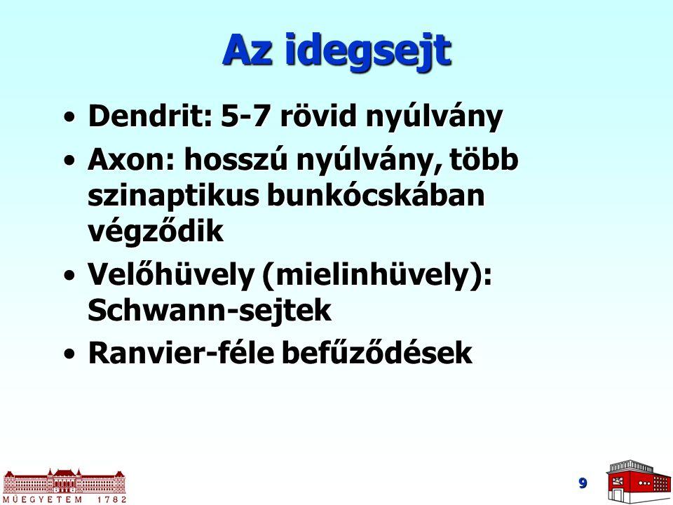 Az idegsejt Dendrit: 5-7 rövid nyúlvány