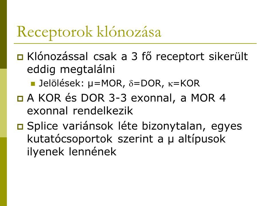 Receptorok klónozása Klónozással csak a 3 fő receptort sikerült eddig megtalálni. Jelölések: µ=MOR, =DOR, =KOR.
