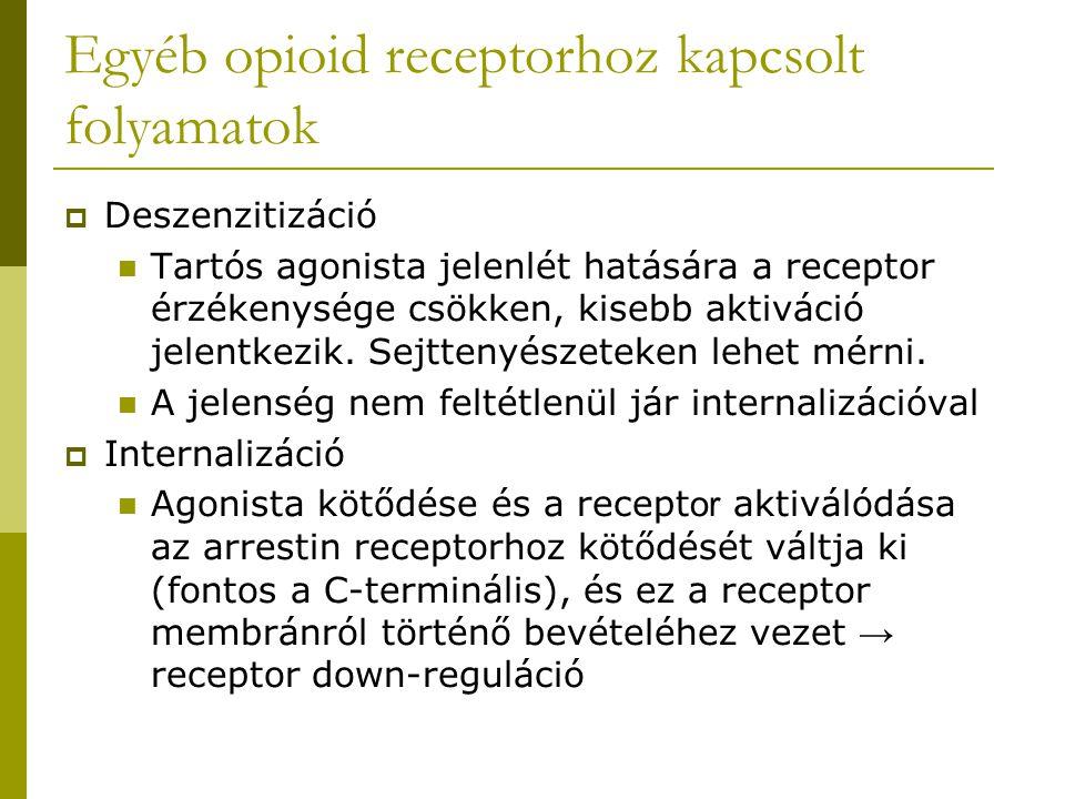 Egyéb opioid receptorhoz kapcsolt folyamatok