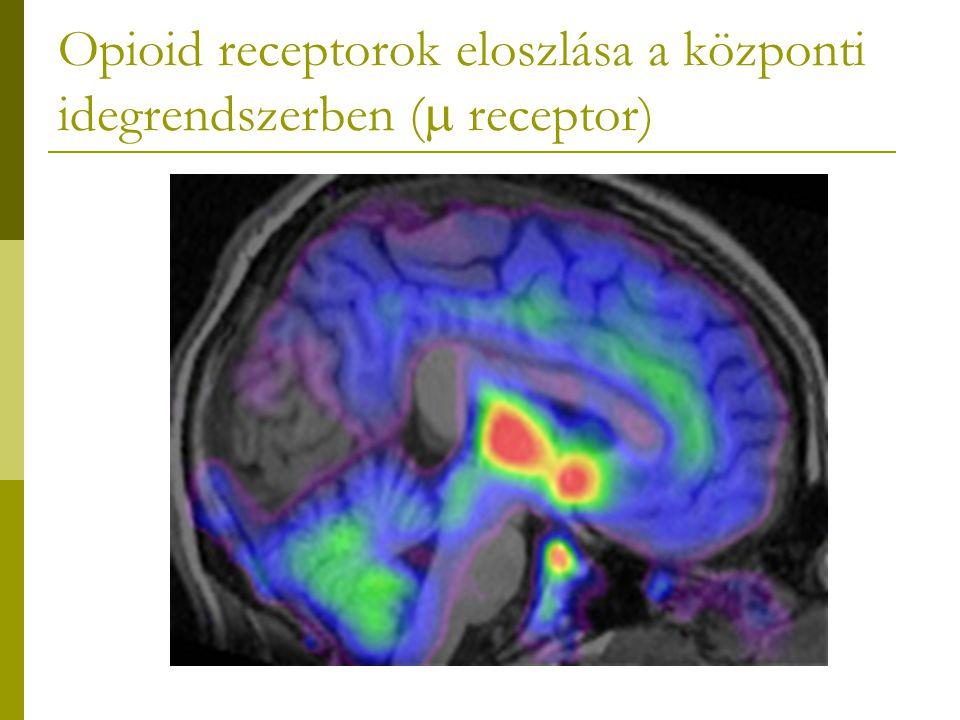 Opioid receptorok eloszlása a központi idegrendszerben ( receptor)