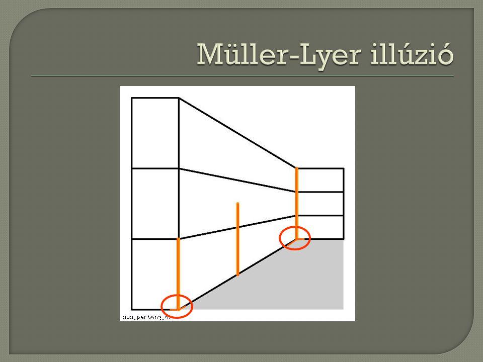 Müller-Lyer illúzió Ha valódi lenne…