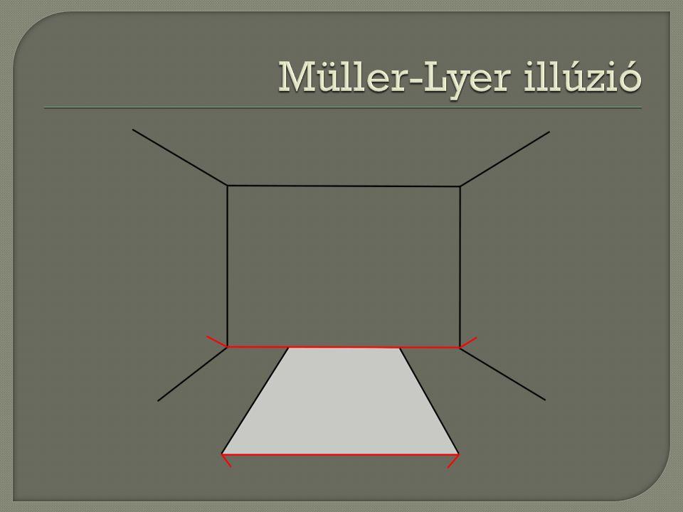 Müller-Lyer illúzió Valódi téri perspektívaként…