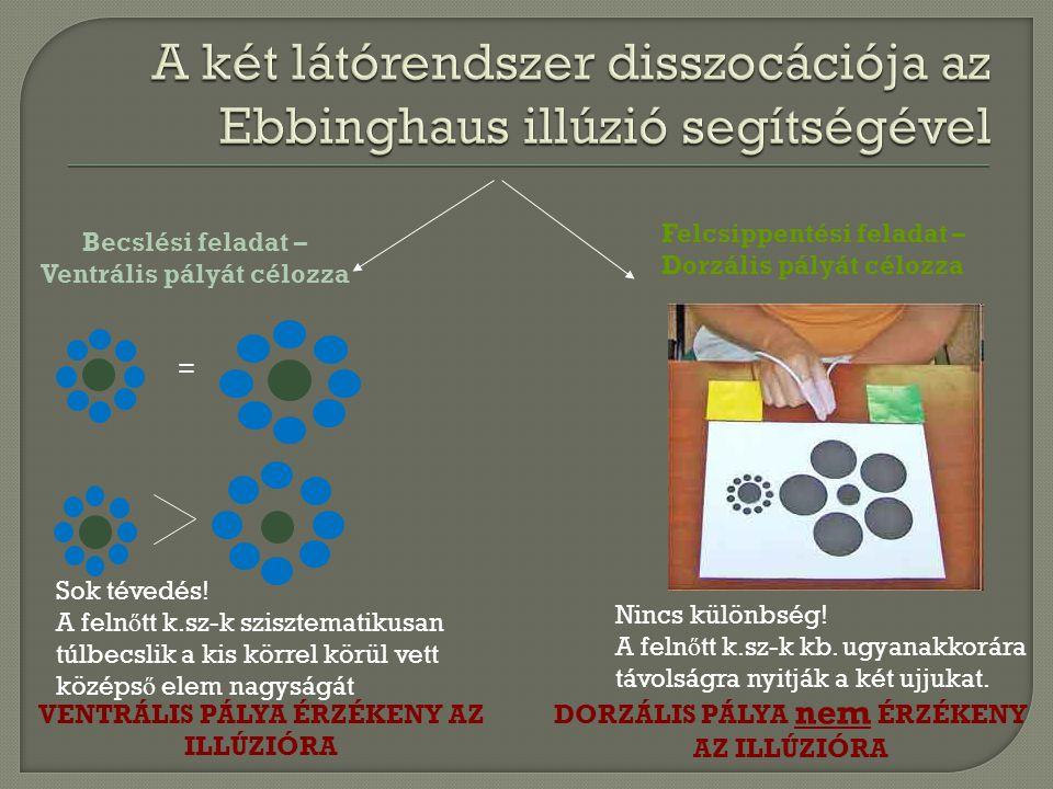 A két látórendszer disszocációja az Ebbinghaus illúzió segítségével