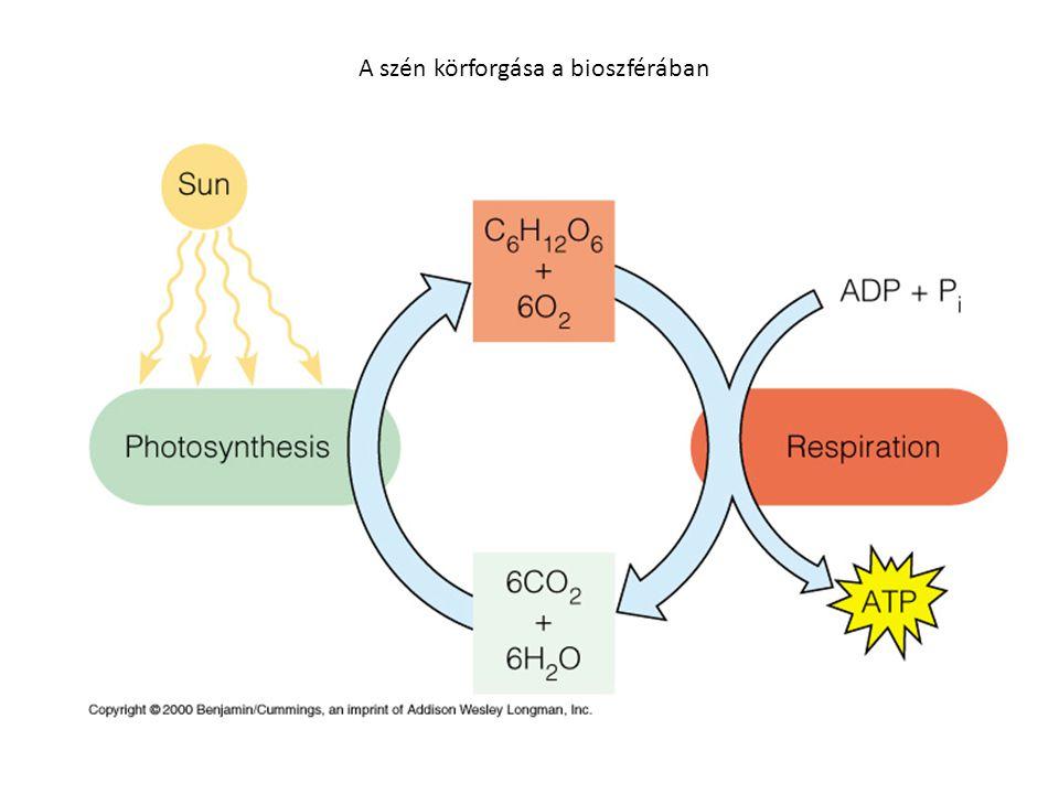 A szén körforgása a bioszférában