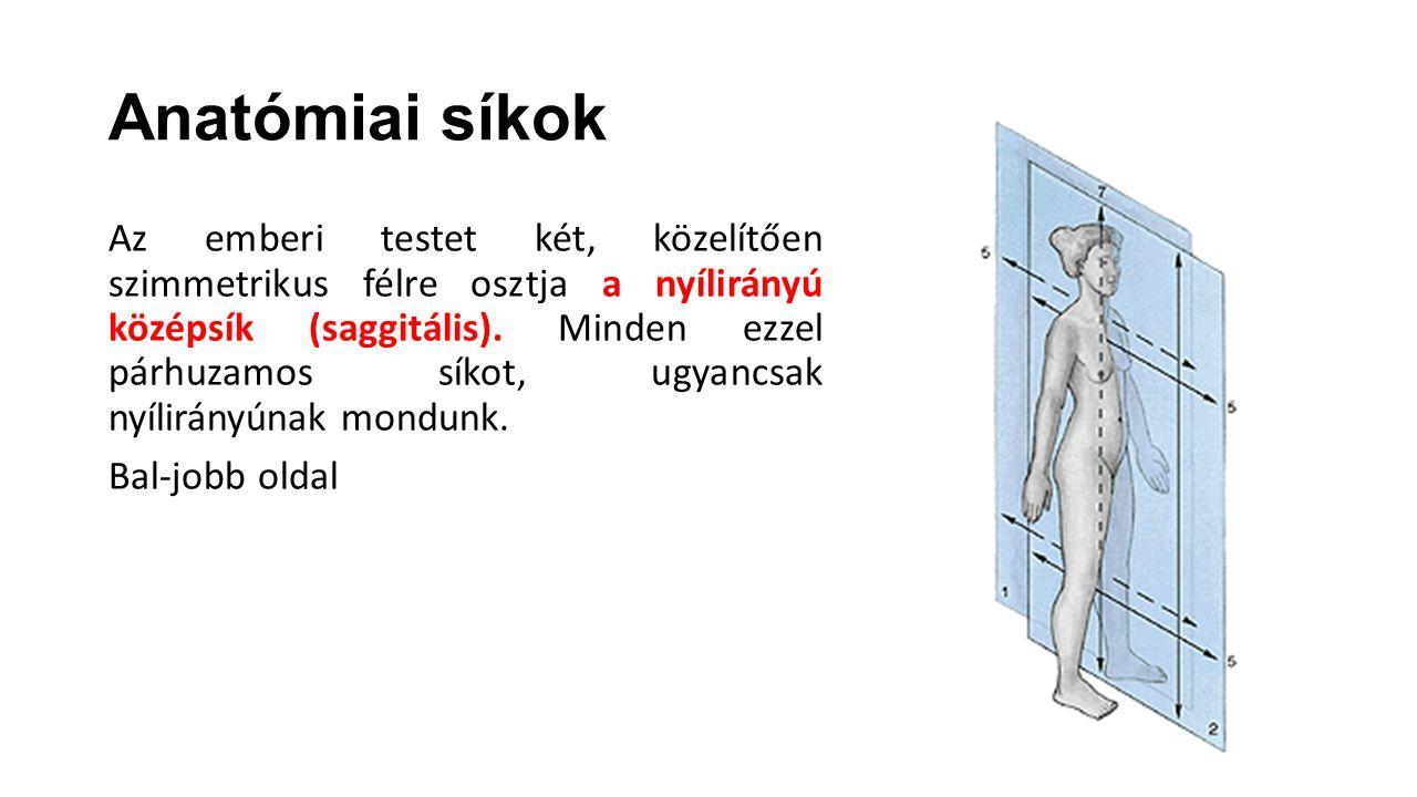 Anatómiai síkok