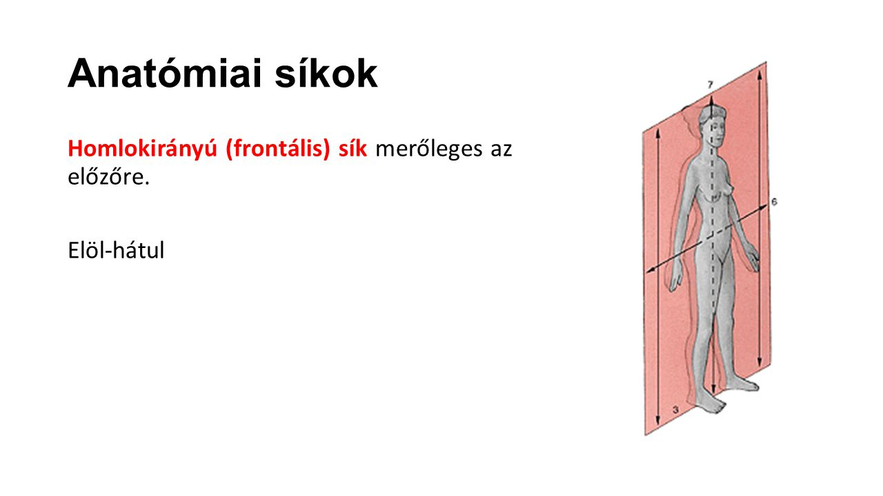 Anatómiai síkok Homlokirányú (frontális) sík merőleges az előzőre. Elöl-hátul