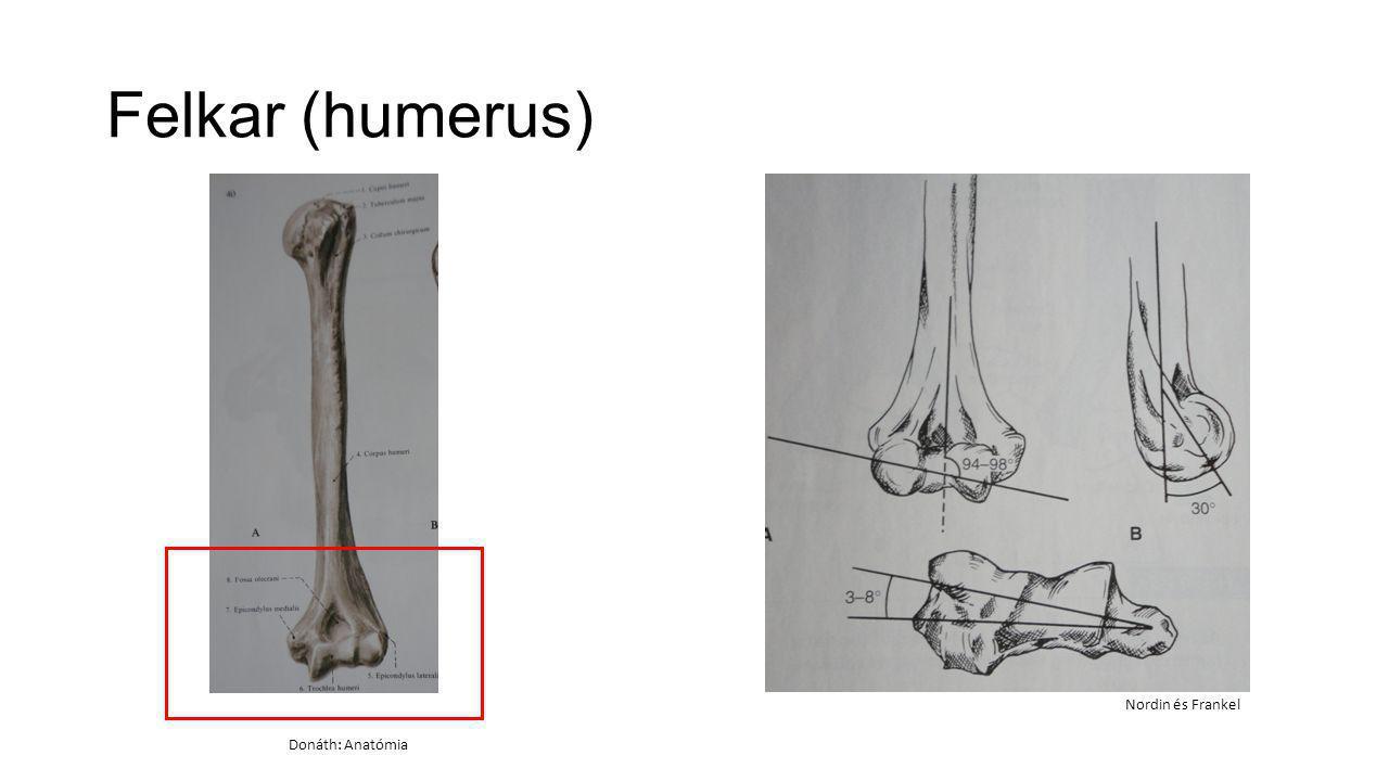 Felkar (humerus) Nordin és Frankel Donáth: Anatómia
