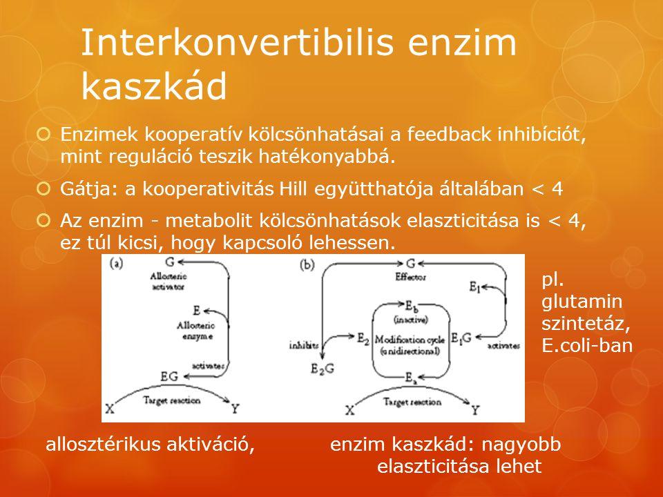Interkonvertibilis enzim kaszkád