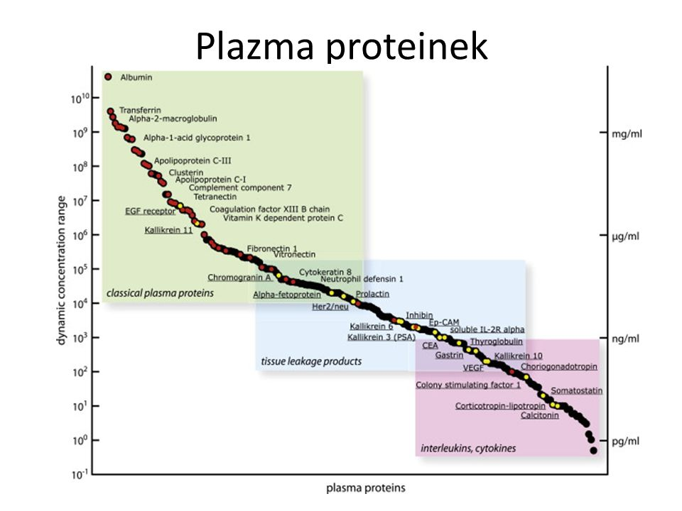 Plazma proteinek