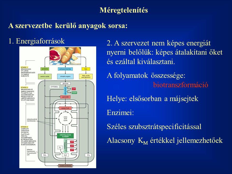 Méregtelenítés A szervezetbe kerülő anyagok sorsa: 1. Energiaforrások.
