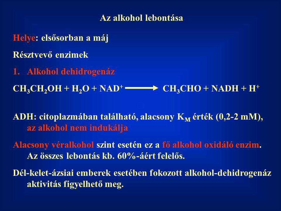 Az alkohol lebontása Helye: elsősorban a máj. Résztvevő enzimek. Alkohol dehidrogenáz. CH3CH2OH + H2O + NAD+ CH3CHO + NADH + H+