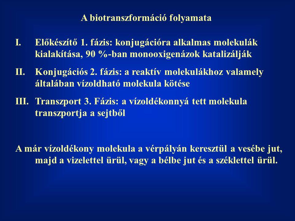 A biotranszformáció folyamata