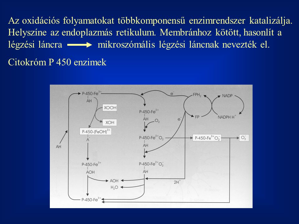 Az oxidációs folyamatokat többkomponensű enzimrendszer katalizálja