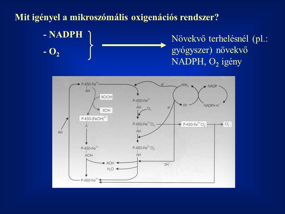 Mit igényel a mikroszómális oxigenációs rendszer