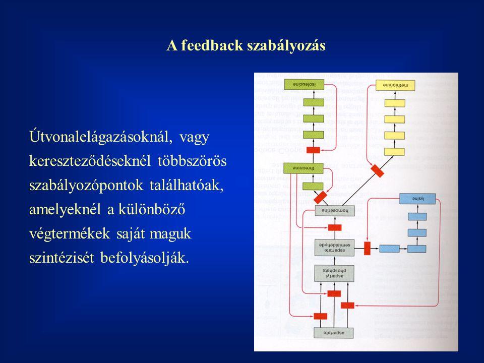A feedback szabályozás