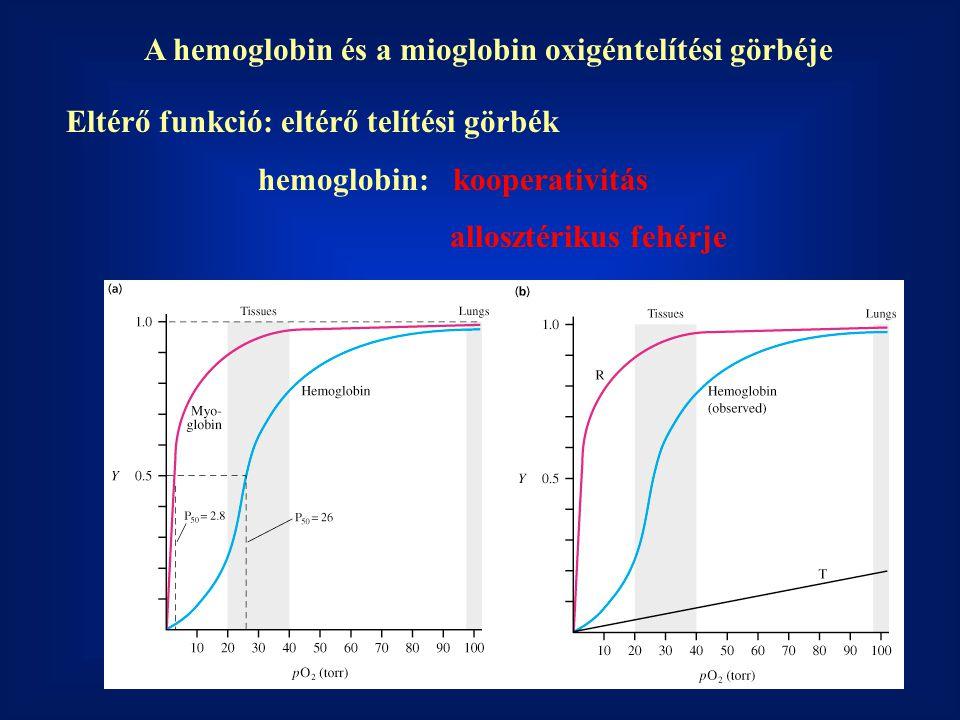 A hemoglobin és a mioglobin oxigéntelítési görbéje