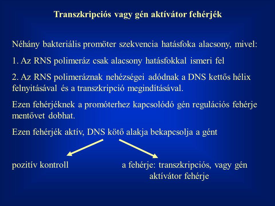 Transzkripciós vagy gén aktívátor fehérjék