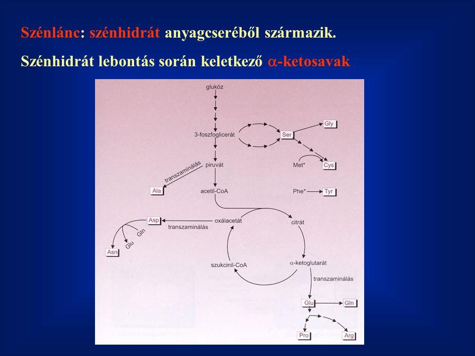 Szénlánc: szénhidrát anyagcseréből származik.