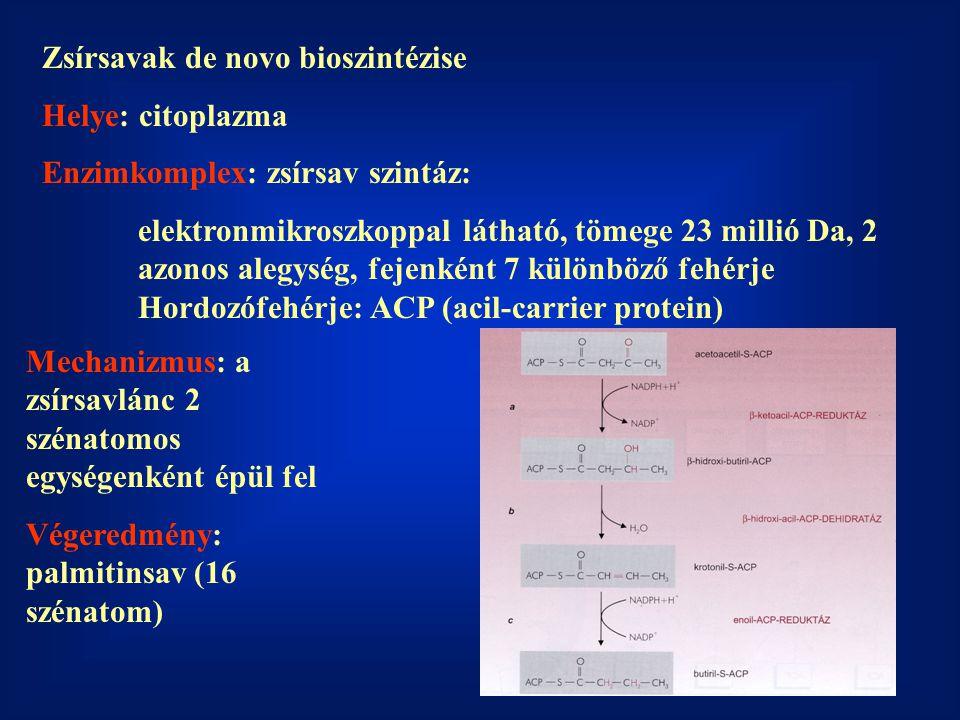Zsírsavak de novo bioszintézise