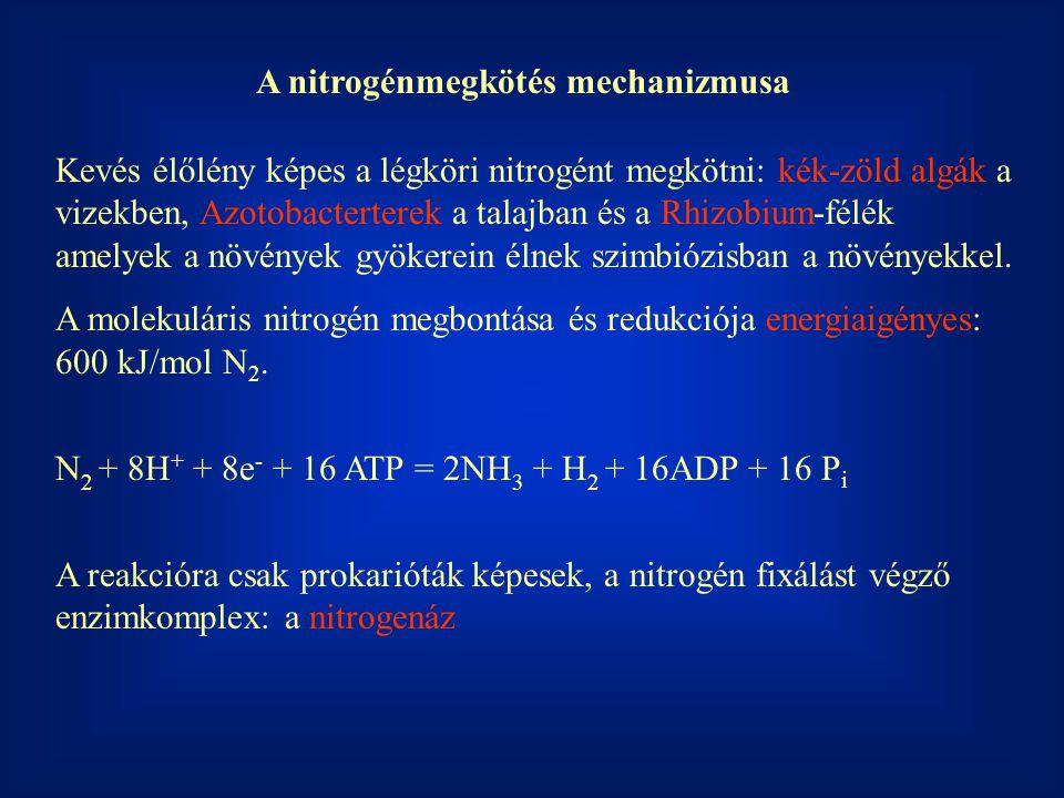 A nitrogénmegkötés mechanizmusa
