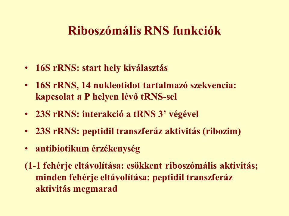 Riboszómális RNS funkciók